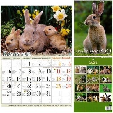 Kalendorius sieninis